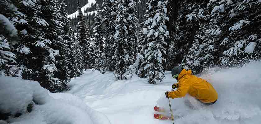 skier-in-the-trees-in-banff.jpg